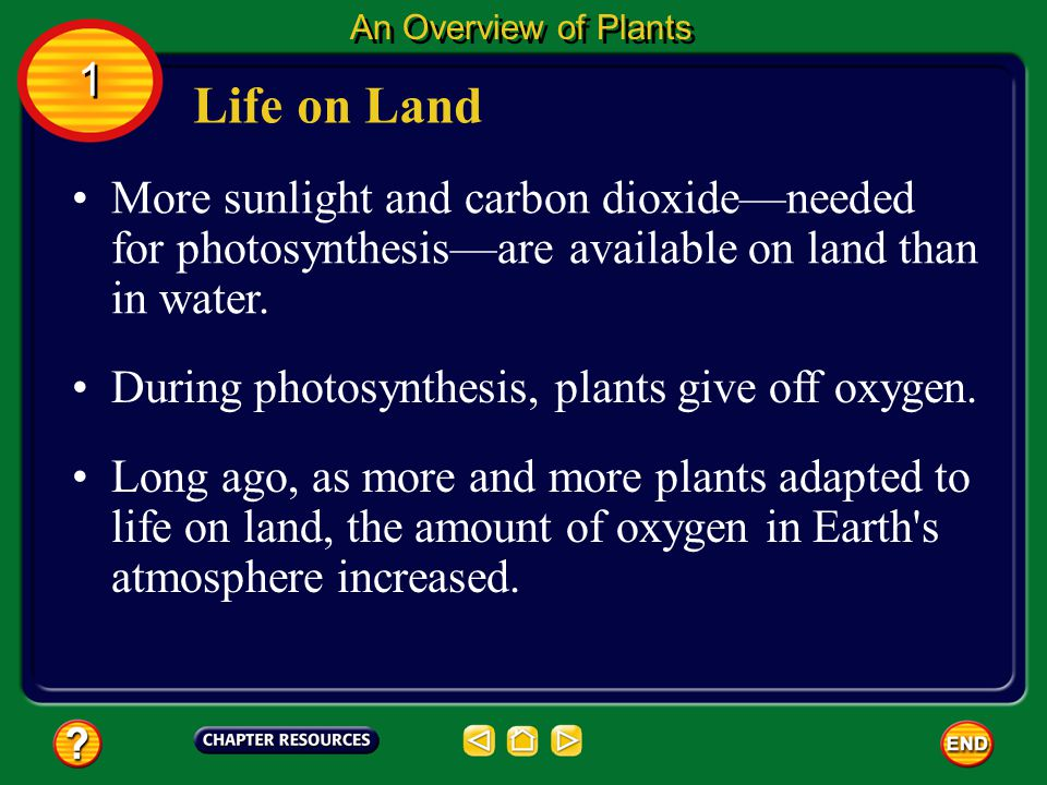 An Overview of Plants 1. Life on Land. More sunlight and carbon dioxide—needed for photosynthesis—are available on land than in water.