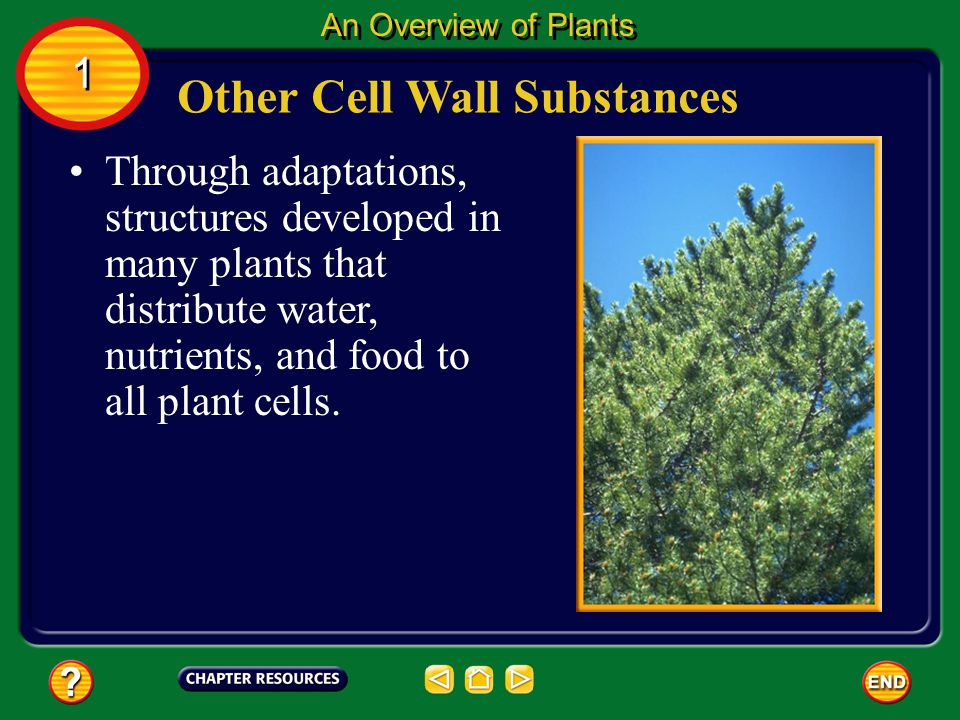 Other Cell Wall Substances
