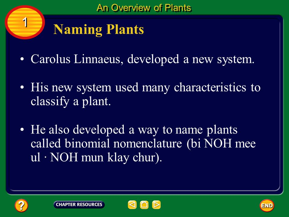 Naming Plants 1 Carolus Linnaeus, developed a new system.