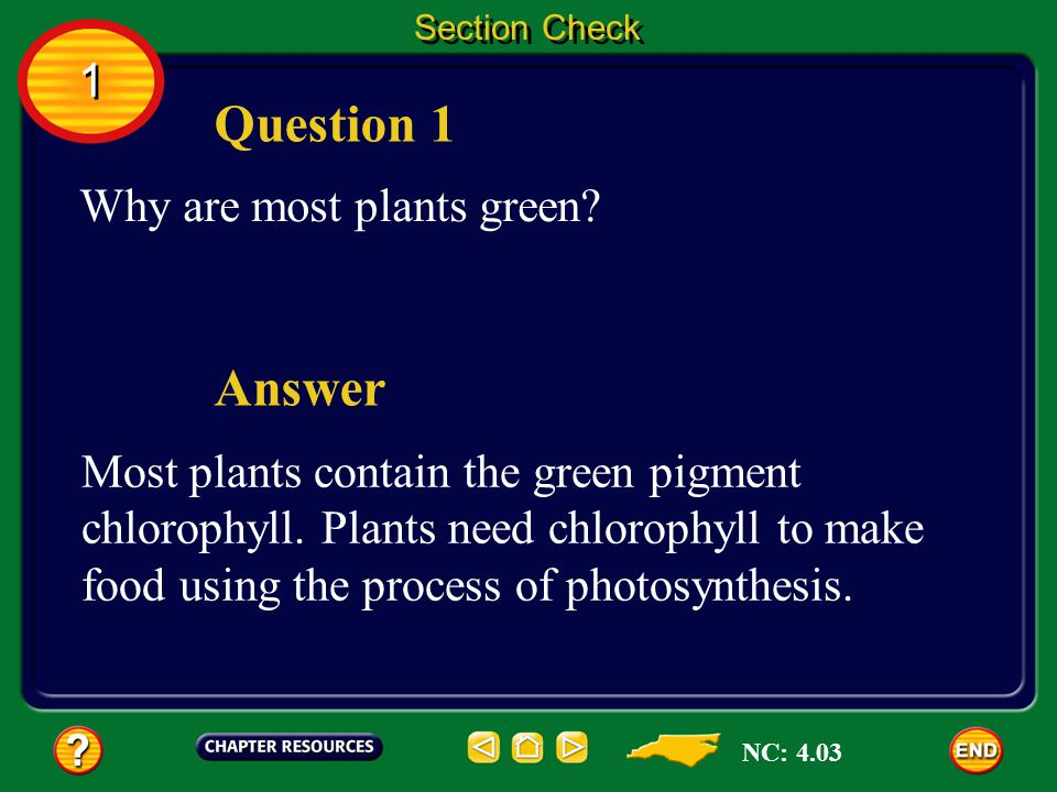 Question 1 Answer 1 Why are most plants green