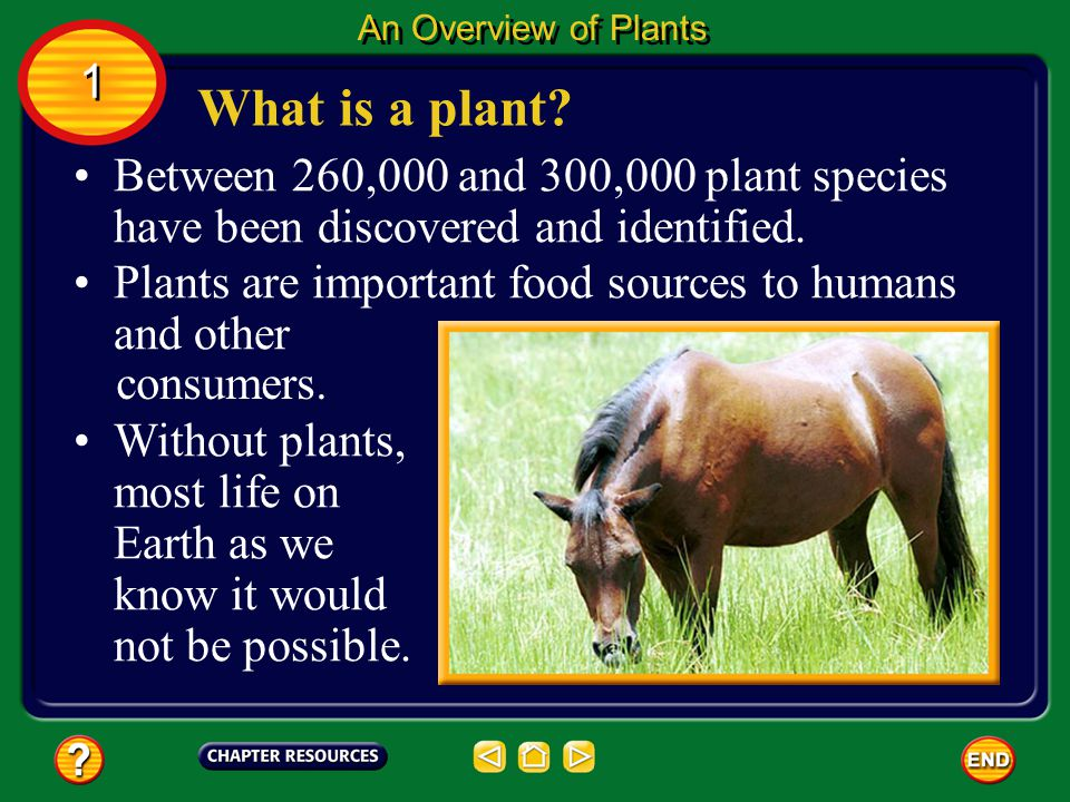 An Overview of Plants 1. What is a plant Between 260,000 and 300,000 plant species have been discovered and identified.