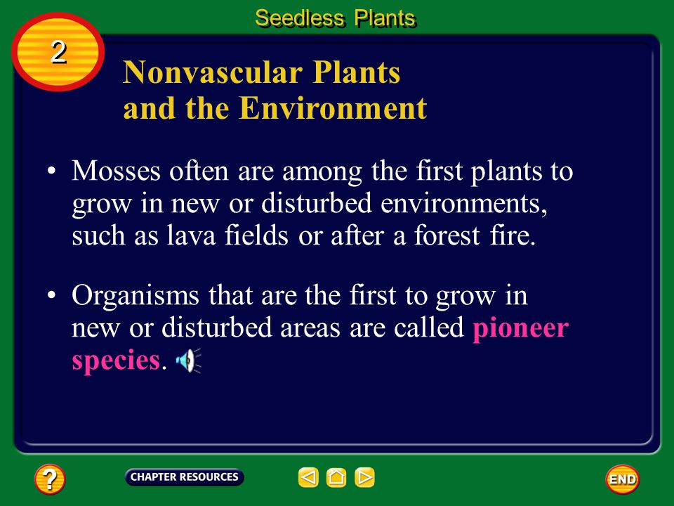 Nonvascular Plants and the Environment