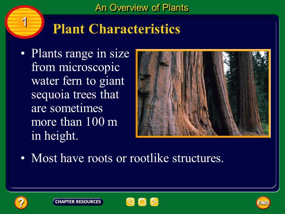 Plant Characteristics