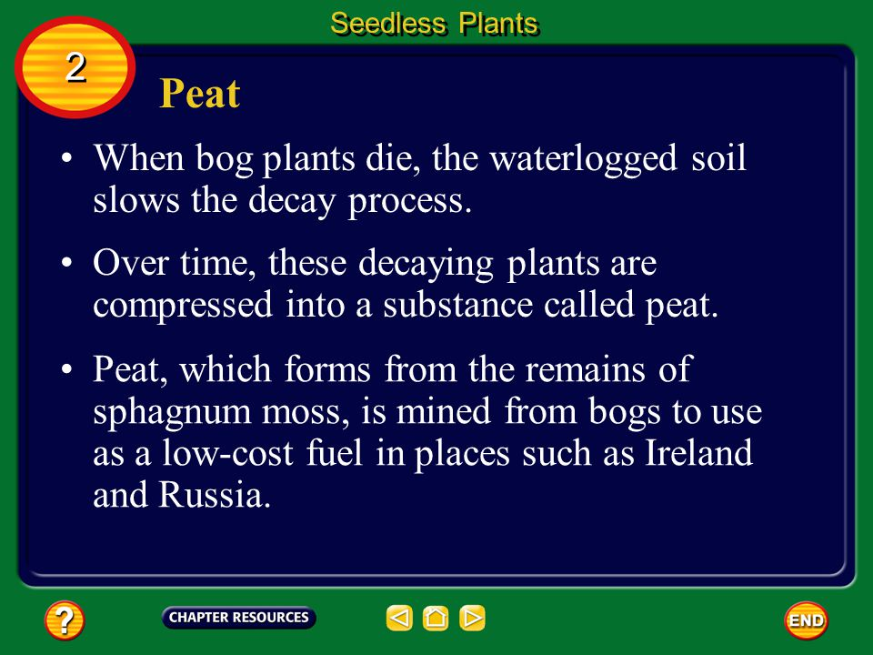 Seedless Plants 2. Peat. When bog plants die, the waterlogged soil slows the decay process.