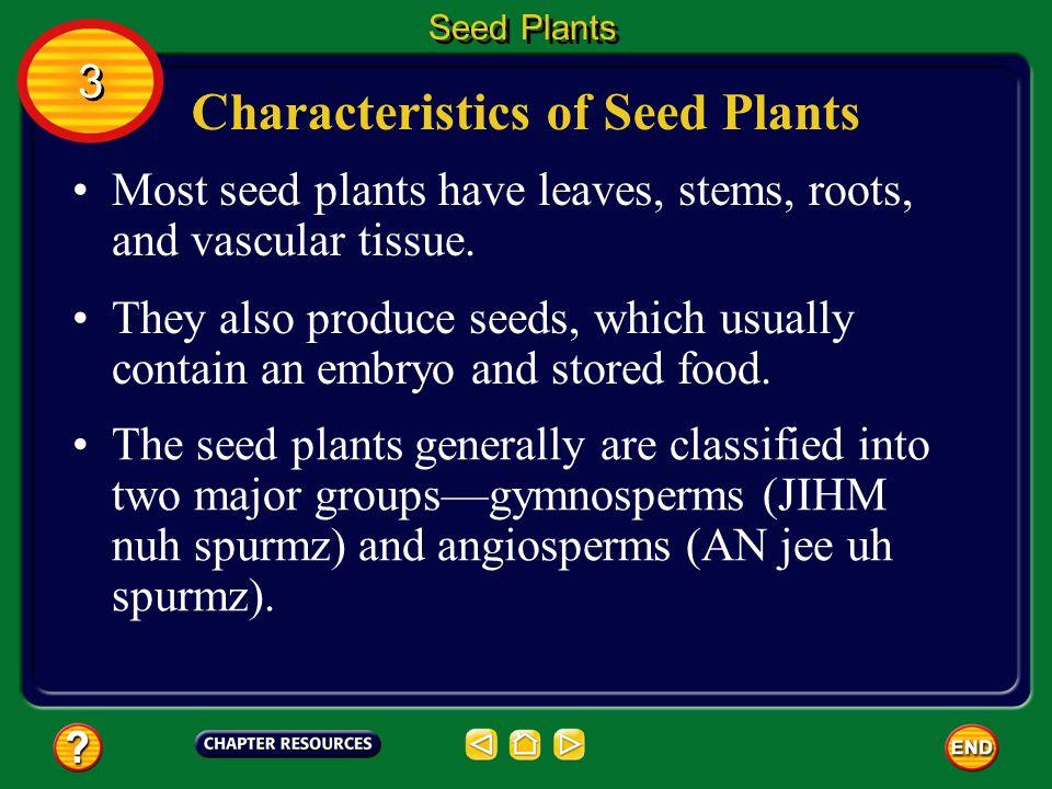 Characteristics of Seed Plants