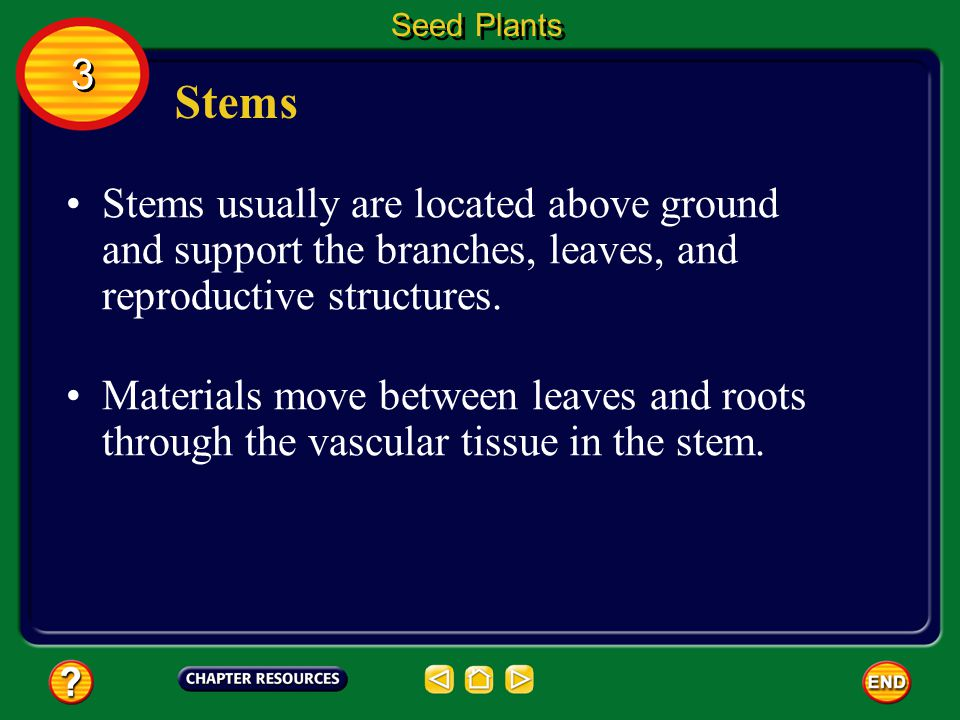 Seed Plants 3. Stems. Stems usually are located above ground and support the branches, leaves, and reproductive structures.