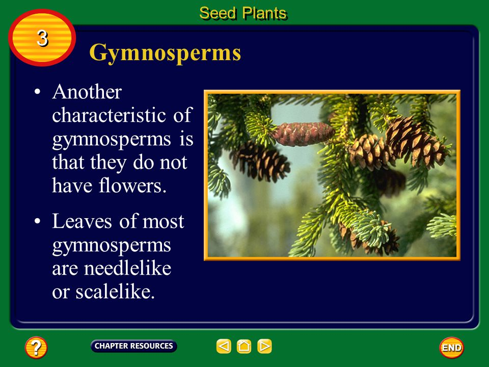 Seed Plants 3. Gymnosperms. Another characteristic of gymnosperms is that they do not have flowers.