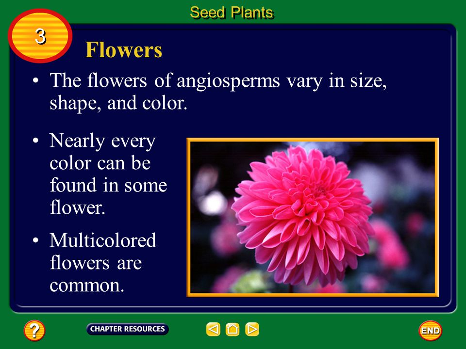 Flowers 3 The flowers of angiosperms vary in size, shape, and color.