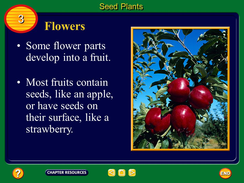 Flowers 3 Some flower parts develop into a fruit.