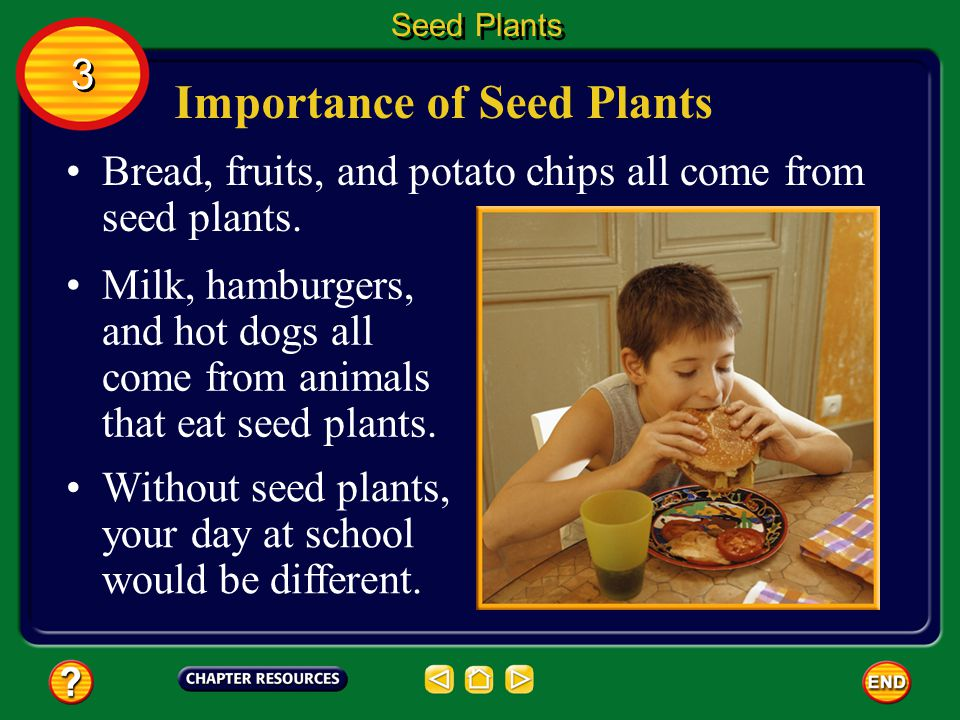 Importance of Seed Plants