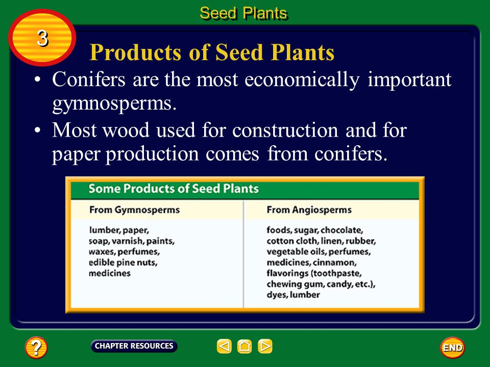 Products of Seed Plants