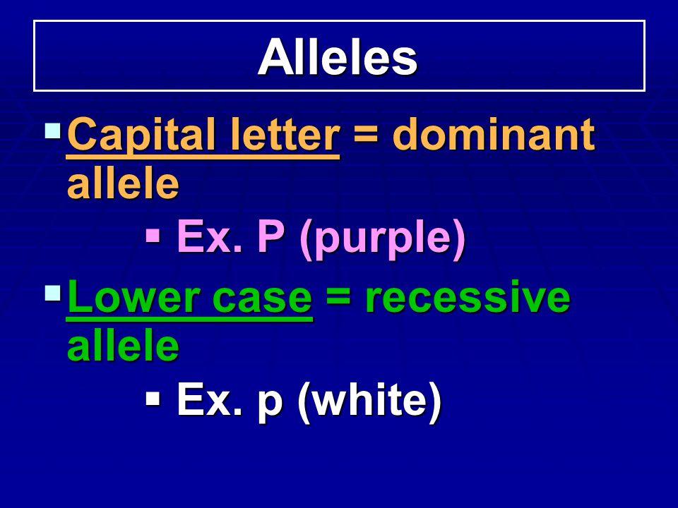 Alleles Capital letter = dominant allele Ex. P (purple)