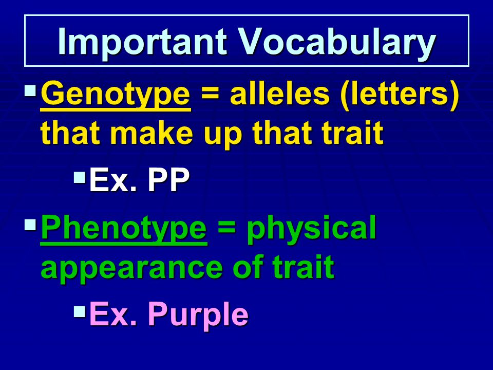 Important Vocabulary Genotype = alleles (letters) that make up that trait. Ex. PP. Phenotype = physical appearance of trait.