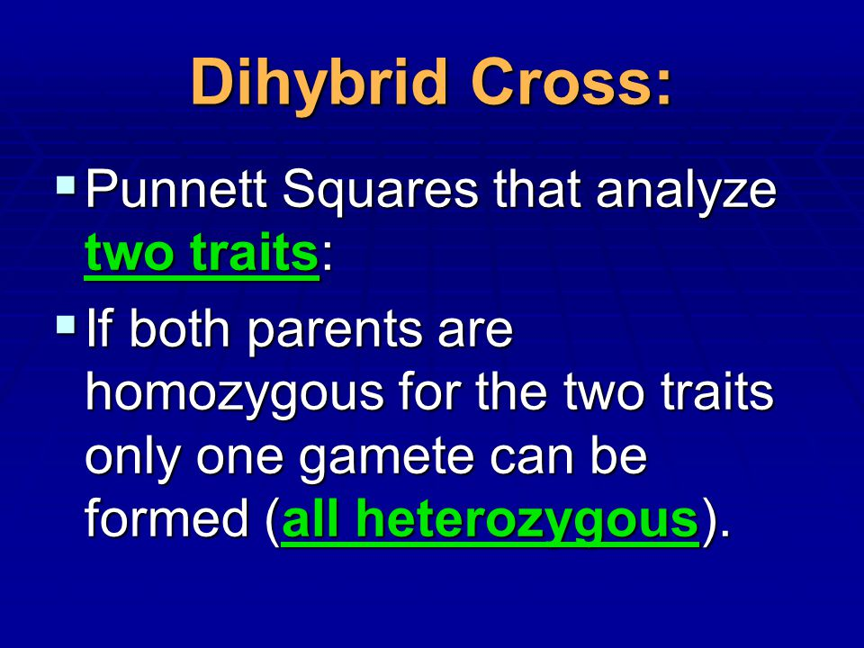 Dihybrid Cross: Punnett Squares that analyze two traits: