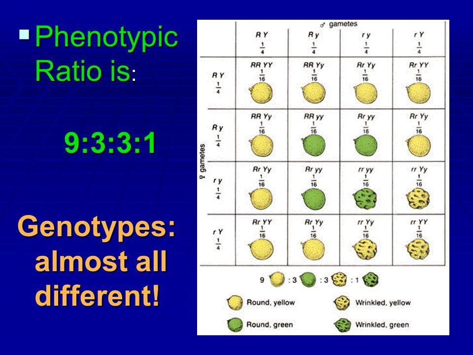 Genotypes: almost all different!
