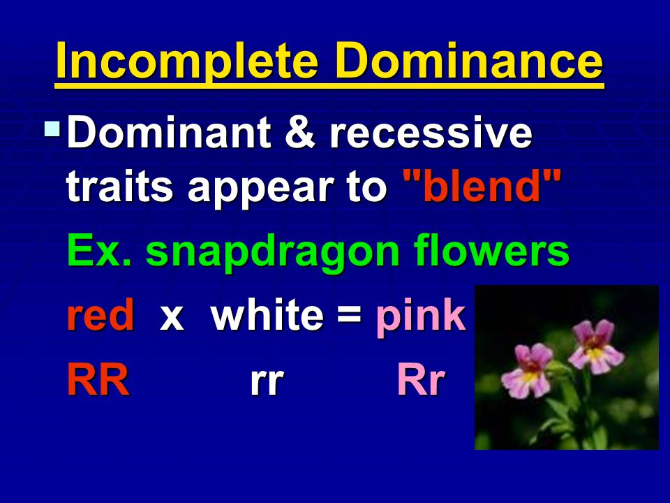 Incomplete Dominance Dominant & recessive traits appear to blend