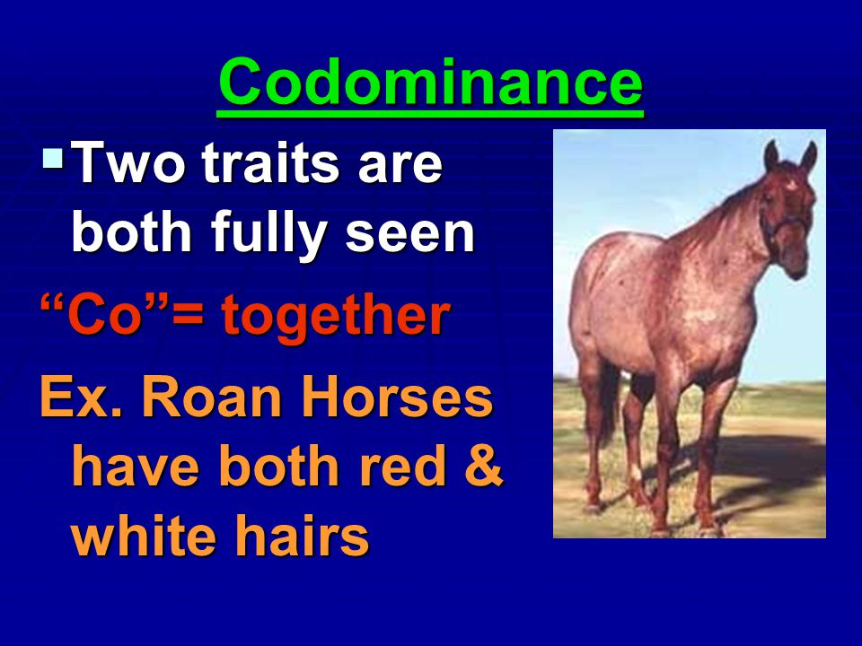 Codominance Two traits are both fully seen Co = together