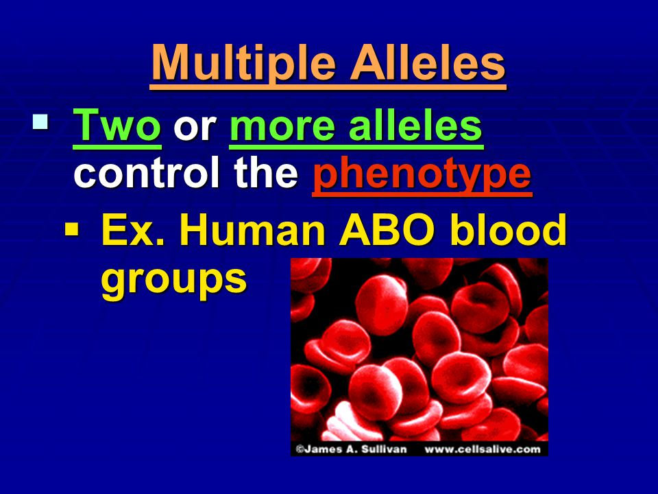 Multiple Alleles Two or more alleles control the phenotype