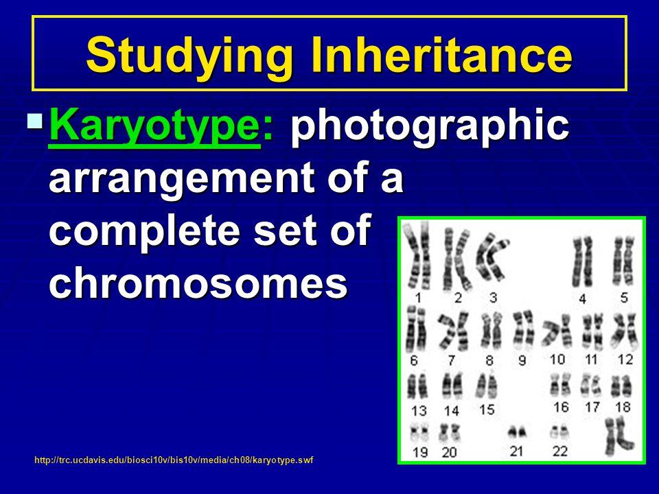 Studying Inheritance Karyotype: photographic arrangement of a complete set of chromosomes.