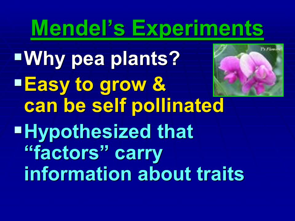 Mendel's Experiments Why pea plants