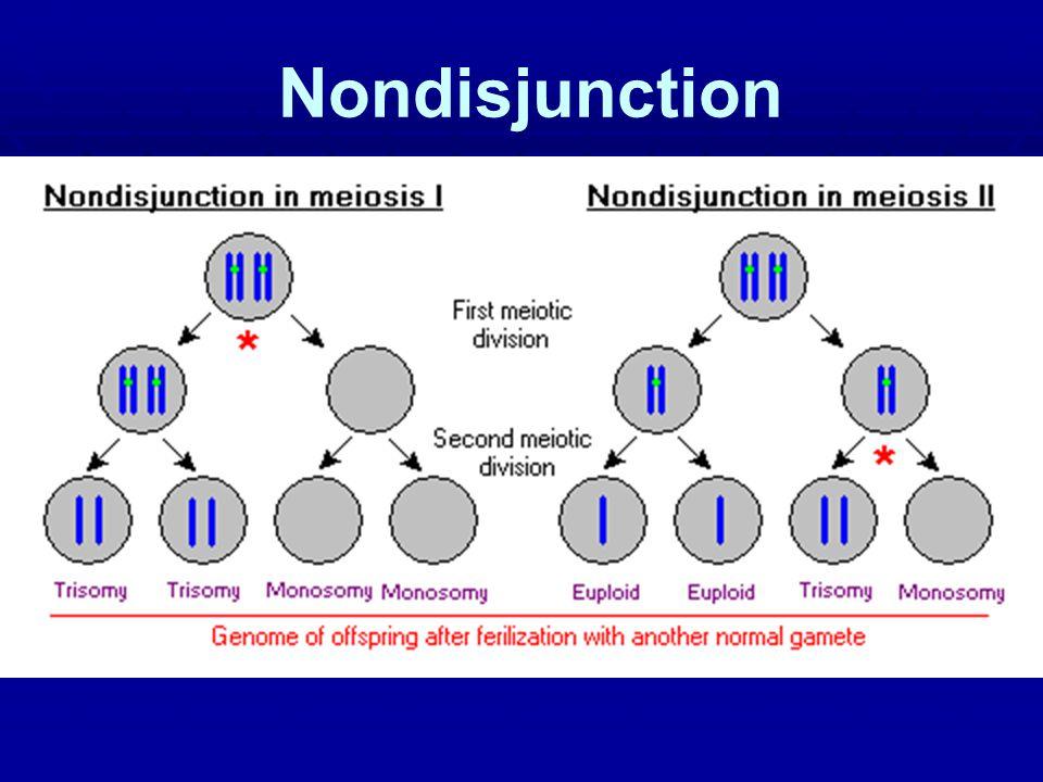 Nondisjunction 61