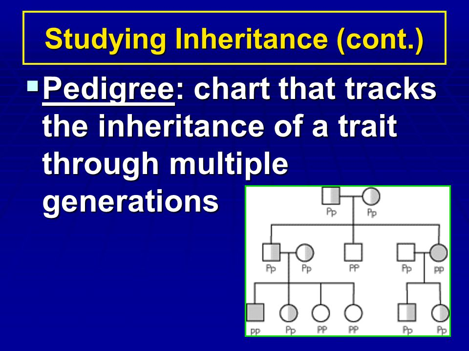 Studying Inheritance (cont.)