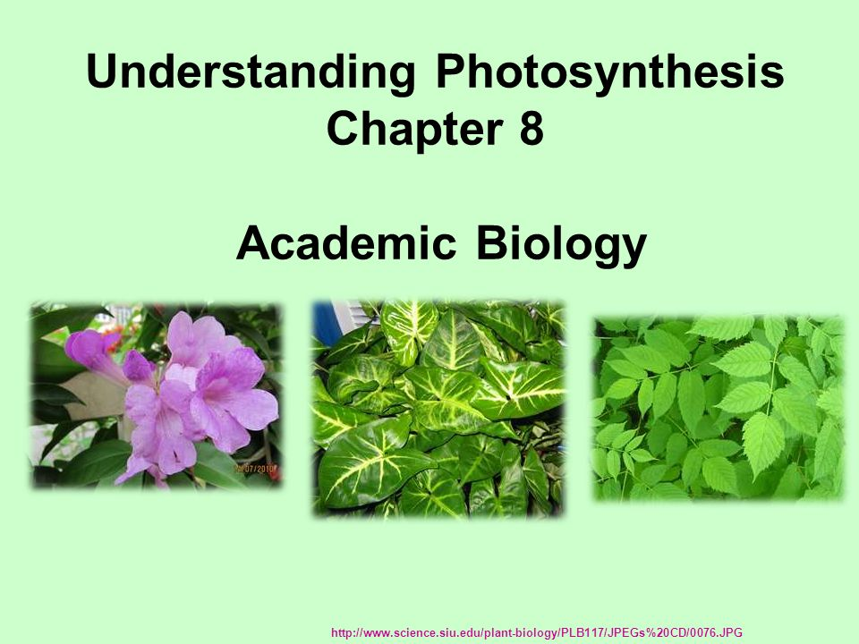 Understanding Photosynthesis Chapter 8 Academic Biology