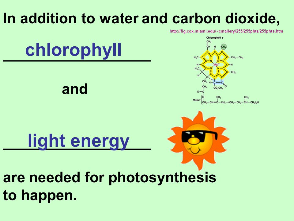 chlorophyll light energy In addition to water and carbon dioxide,