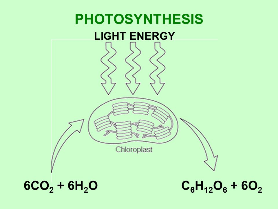 PHOTOSYNTHESIS LIGHT ENERGY 6CO2 + 6H2O C6H12O6 + 6O2