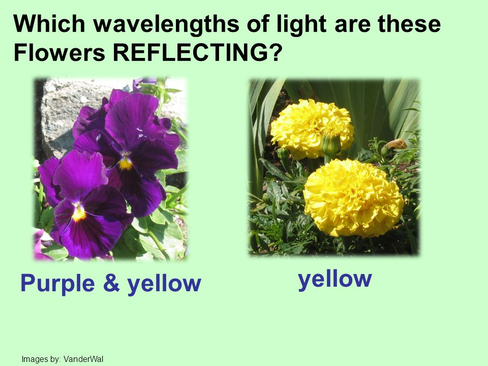 Which wavelengths of light are these Flowers REFLECTING