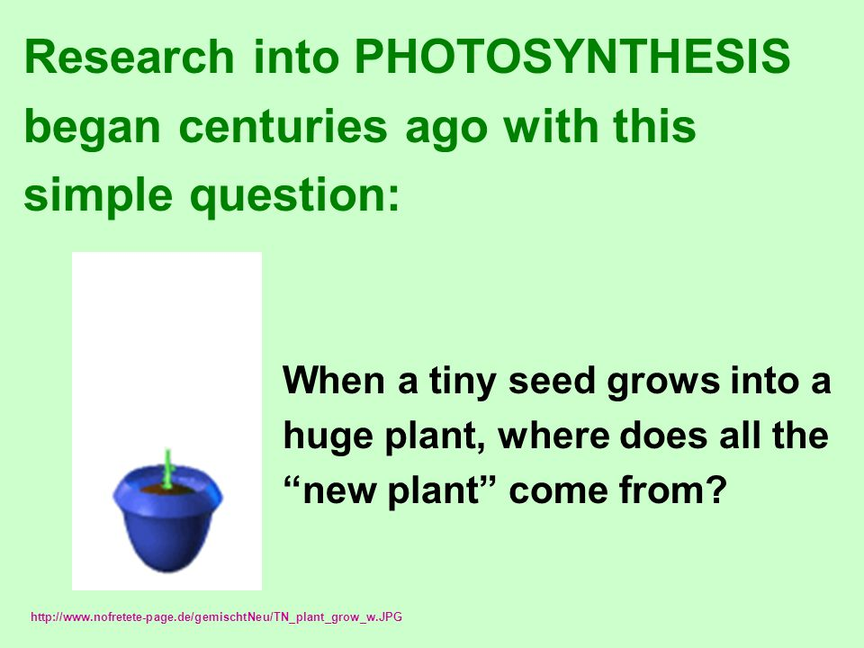 Research into PHOTOSYNTHESIS began centuries ago with this