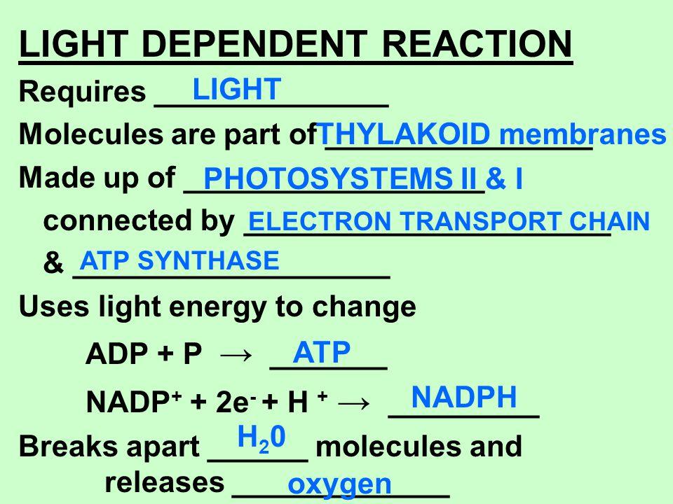 LIGHT DEPENDENT REACTION