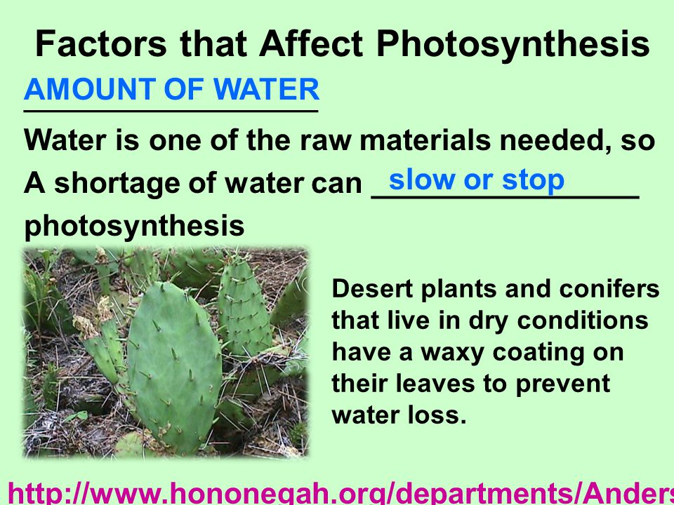 Factors that Affect Photosynthesis