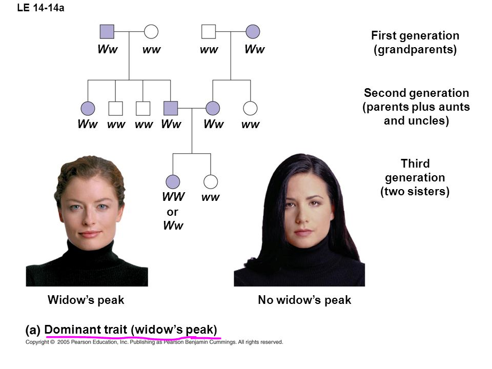 Dominant trait (widow's peak)