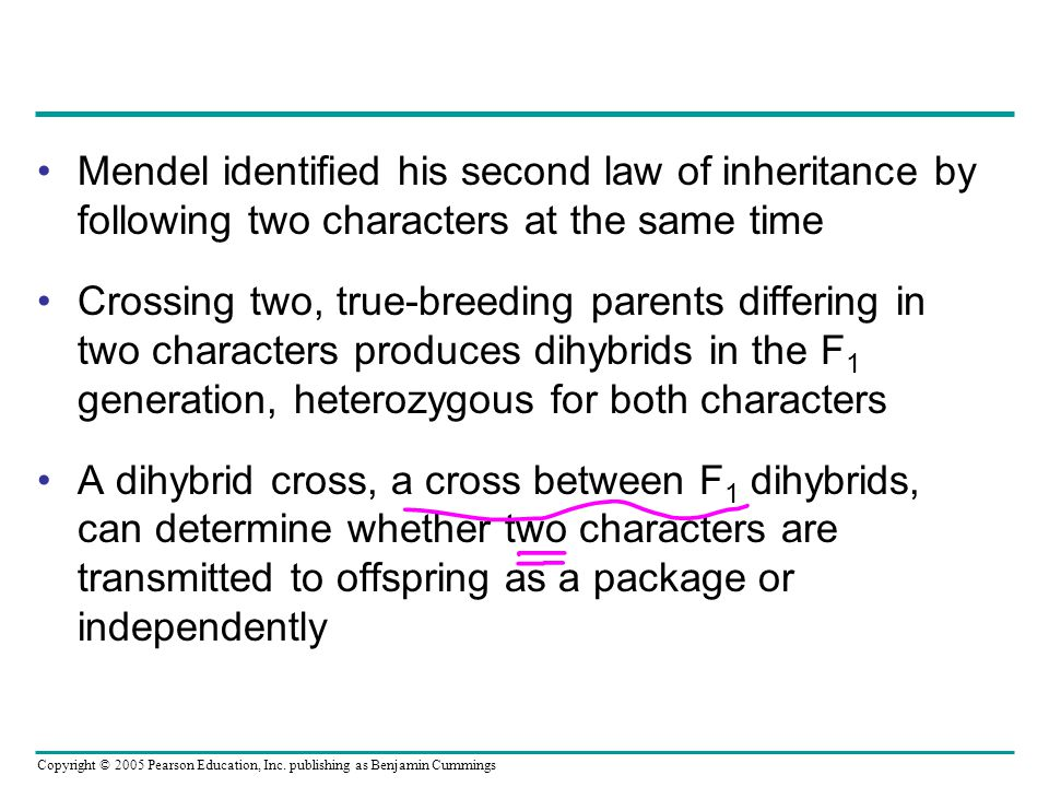 Mendel identified his second law of inheritance by following two characters at the same time