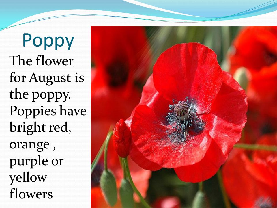 Poppy The flower for August is the poppy.