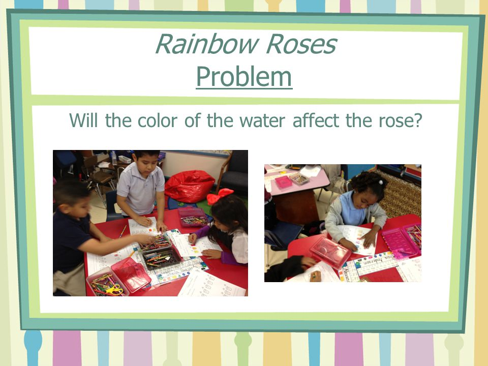 Will the color of the water affect the rose