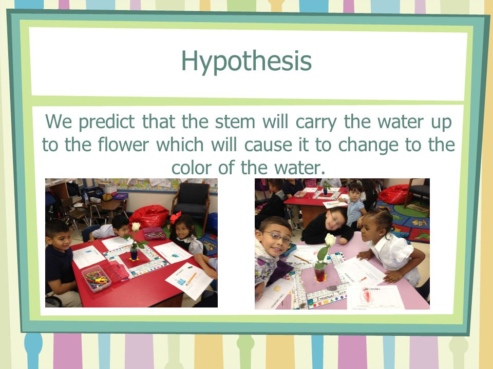 Hypothesis We predict that the stem will carry the water up to the flower which will cause it to change to the color of the water.