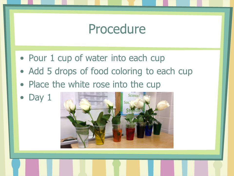 Procedure Pour 1 cup of water into each cup
