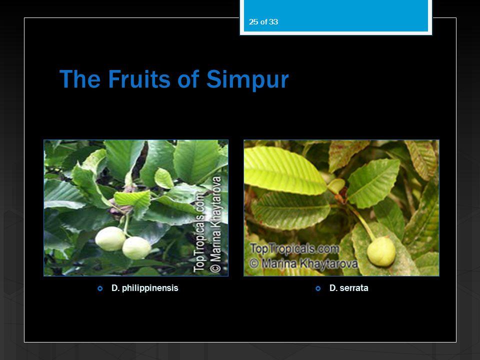 The Fruits of Simpur D. philippinensis D. serrata