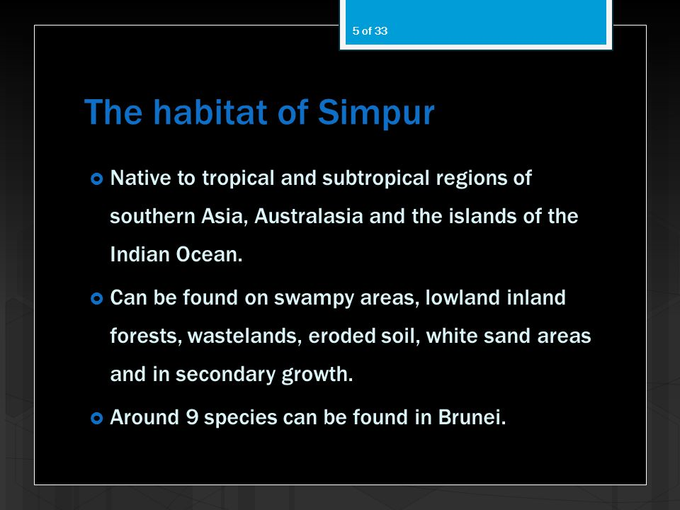 The habitat of Simpur Native to tropical and subtropical regions of southern Asia, Australasia and the islands of the Indian Ocean.