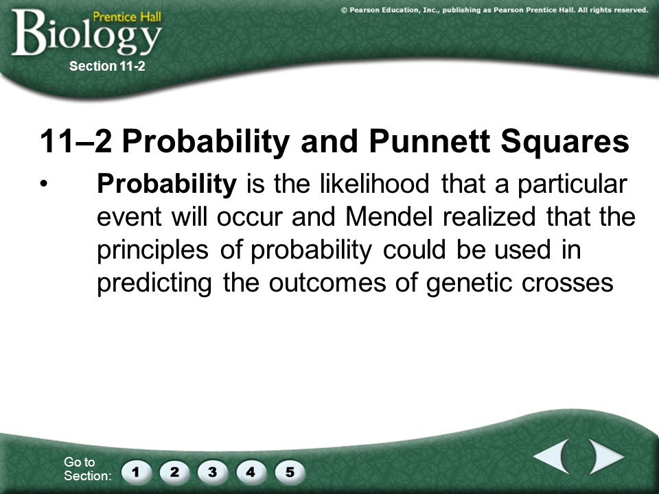 11–2 Probability and Punnett Squares