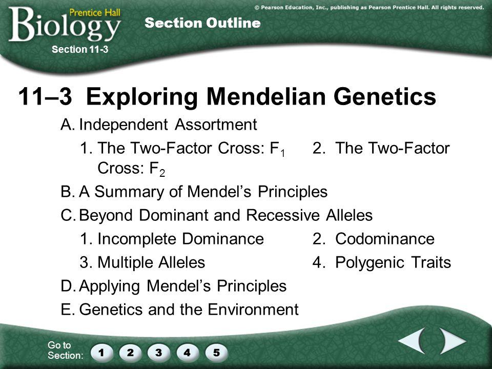 11–3 Exploring Mendelian Genetics