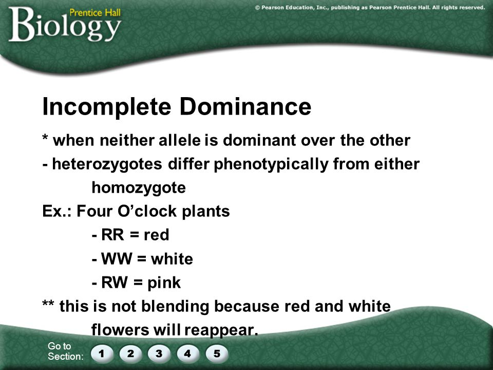 Incomplete Dominance * when neither allele is dominant over the other