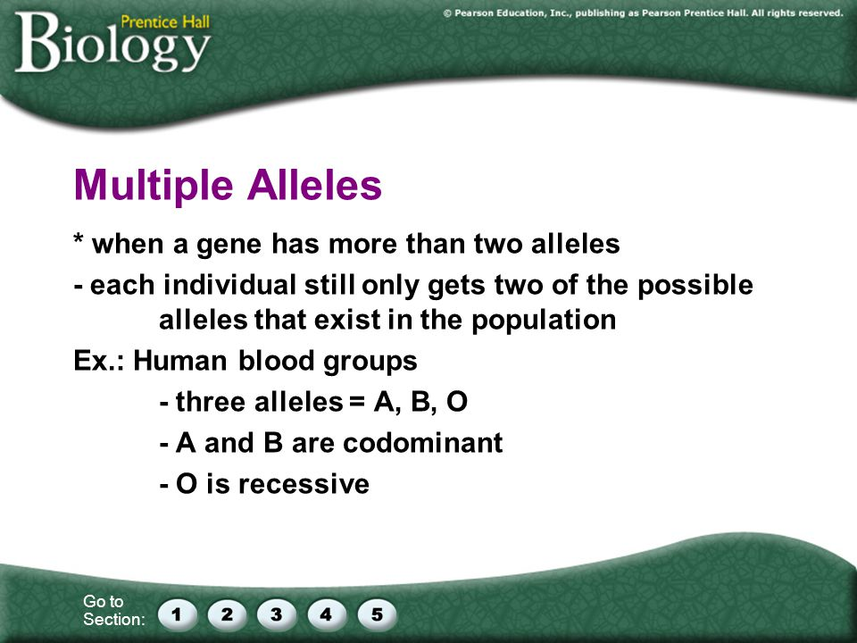Multiple Alleles * when a gene has more than two alleles