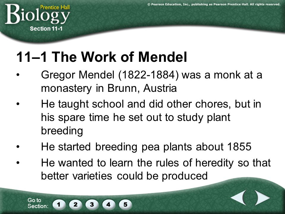 Section –1 The Work of Mendel. Gregor Mendel ( ) was a monk at a monastery in Brunn, Austria.