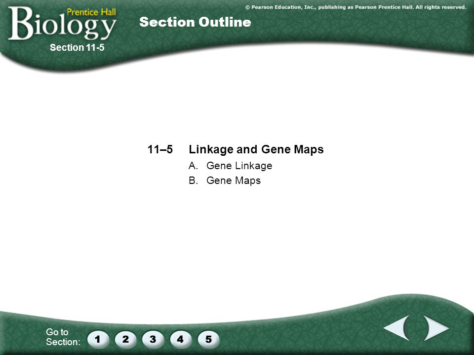 Section Outline 11–5 Linkage and Gene Maps A. Gene Linkage