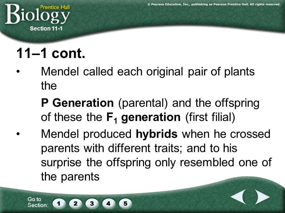 11–1 cont. Mendel called each original pair of plants the