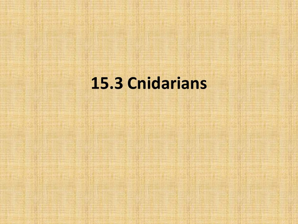 15.3 Cnidarians