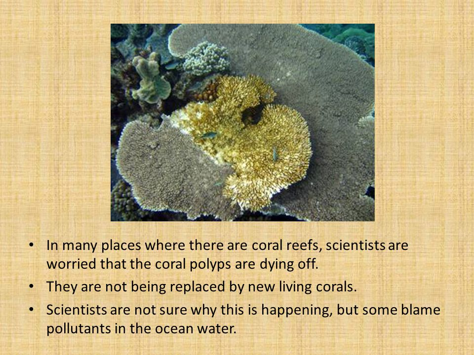 In many places where there are coral reefs, scientists are worried that the coral polyps are dying off.
